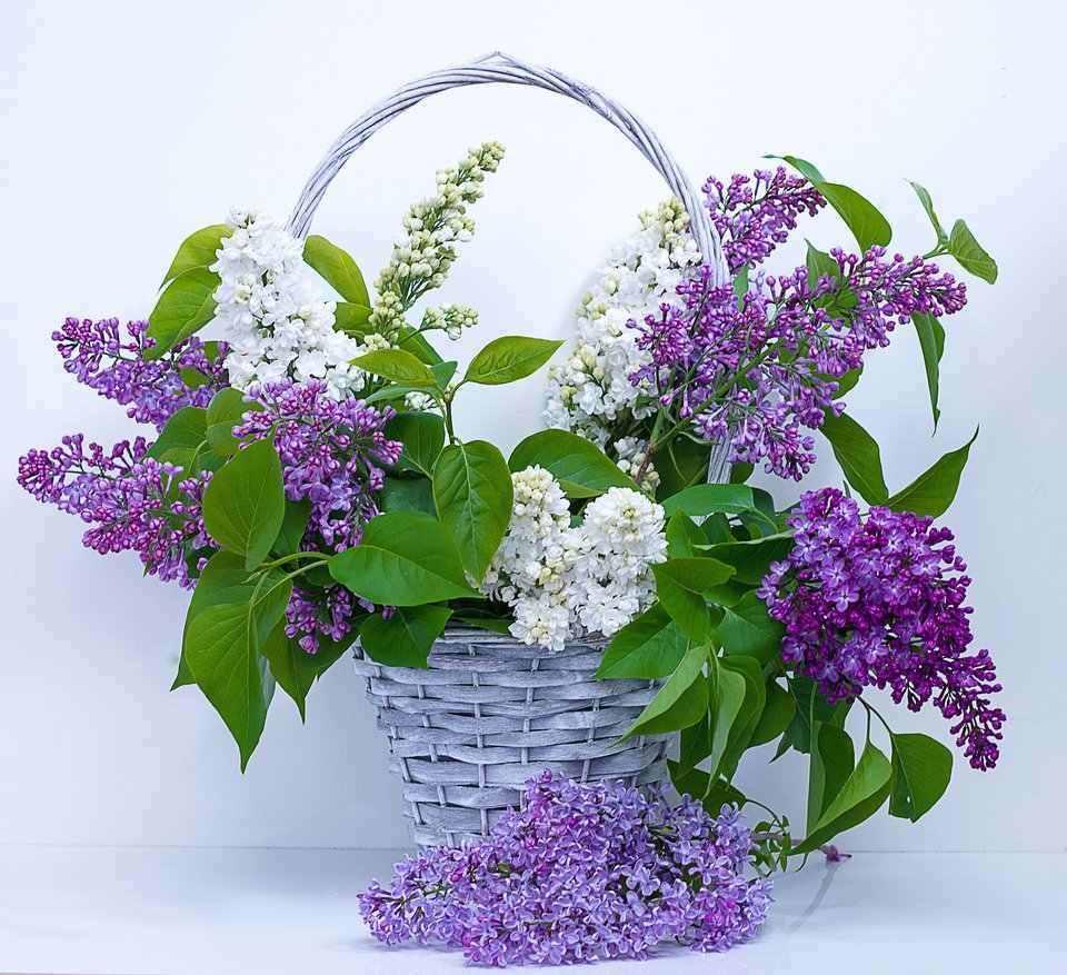 Flower Arrangements - ...